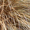 Click for Natives/Carex