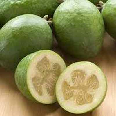 Picture of Feijoa Anatoki