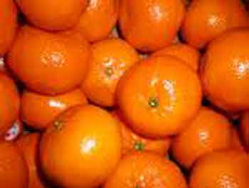 Picture of Mandarin Satsuma Miho