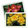 Click for Vouchers_and_Gifts/Gifts_for_Gardeners