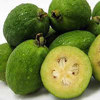 Picture of Feijoa Gemini