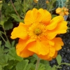 Picture of Geum Firestorm