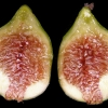 Picture of Fig White Adriatic