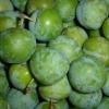 Picture of Plum Dble Greengage/Coe's Golden Drop