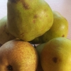 Picture of Pear Doyenne du Comice
