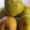 Picture of Pear Doyenne Du Comice BA29