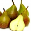 Picture of Pear Seckel QN