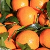 Picture of Orange Seville