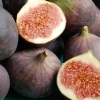 Picture of Fig Sweet Black