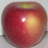 Picture of Apple Pacific Rose MM106