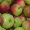 Picture of Apple Priscilla MM106