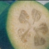 Picture of Feijoa Apollo