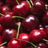 Picture of Cherry Bing