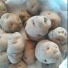 Picture of Potato Karoro