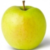 Picture of Apple Golden Delicious MM106
