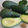 Picture of Persea Avocado Fuerte