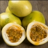 Picture of Passionfruit Panama Gold
