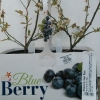 Picture of Blueberry Twin Pack Highbush