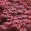 Picture of Acer Garnet H/W