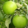 Picture of Apple Tple G Smith/Gol Del/Red Del