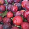 Picture of Plum Purple King