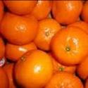 Picture of Mandarin Corsica No 2 Std
