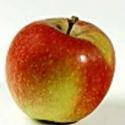 Picture of Apple Braeburn MM102