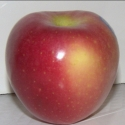 Picture of Apple Pacific Rose MM102