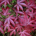 Picture of Acer Moonfire
