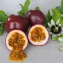 Picture of Passionfruit Panama Red