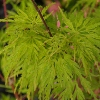Picture of Acer Seiryu