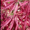 Picture of Acer Tamukeyama H/W