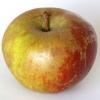 Picture of Apple Belle De Boskoop MM106