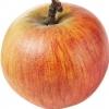 Picture of Apple Coxs Orange M27