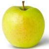 Picture of Apple Golden Delicious Espalier