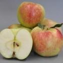 Picture of Apple Mischief
