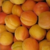 Picture of Apricot Cluthagold