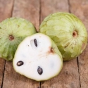 Picture of Cherimoya Canaria