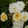 Picture of Danae-Rose