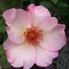 Picture of Ellen Wilmott-Rose