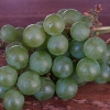 Picture of Grape Niagra