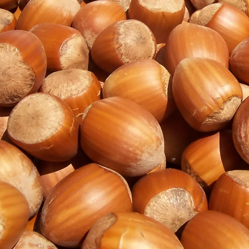 Picture of Hazelnut Tonda di Giffoni