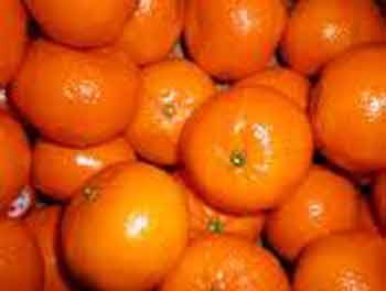 Picture of Mandarin Corsica No.2 Dwarf
