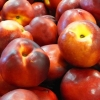 Picture of Nectarine Early Red II