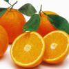Picture of Orange Parent Navel