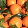 Picture of Orange Seville