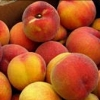 Picture of Peach Glohaven