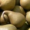 Picture of Pear Tple B.Bosc/D.Comice/Packhams