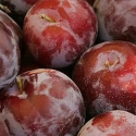 Picture of Plum Dble Santa Rosa/Fortune
