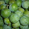 Picture of Plum Greengage GQ